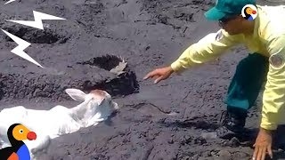 Animals Stuck In Mud Get Help From Brave Strangers | The Dodo