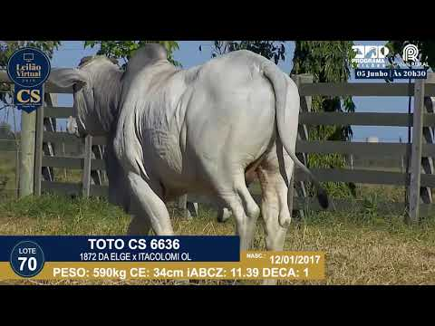 LOTE 70