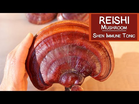 Reishi Mushroom, A Shen Tonic and Immune Modulator