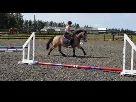 Irish Sports Pony allrounder