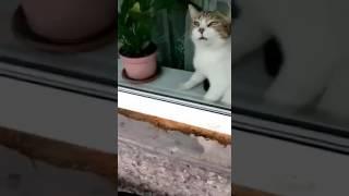 Кот Борис любит чистые окна