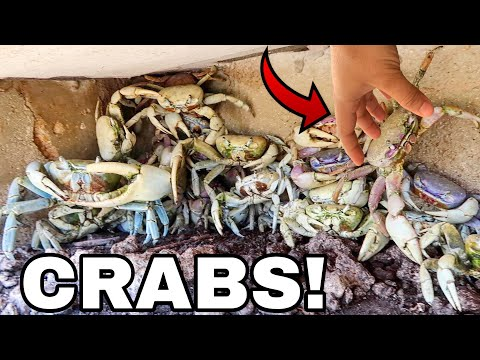 SEARCHING DEEP HOLES FOR GIANT MUD CRABS!