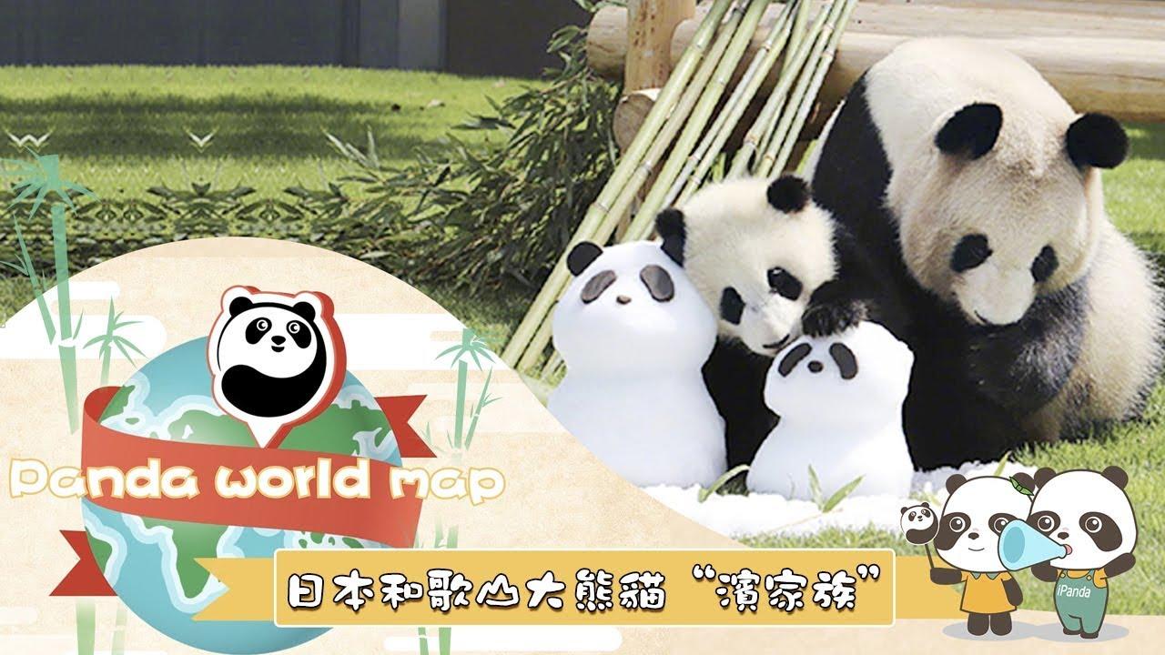 """《熊貓主題趴》揚名中日的英雄熊貓媽媽們:日本和歌山大熊貓""""濱家族""""   iPanda熊貓頻道 - YouTube"""