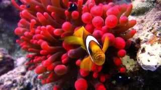 مناظر خلابة صور متحركة وتصوير حي من قاع البحر الأحمر