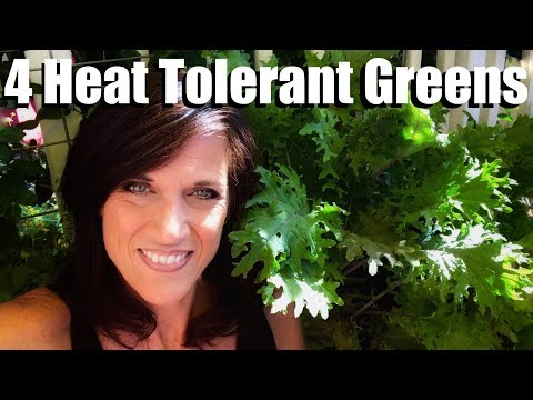 4 Heat Tolerant Greens to Grow in Summer, How to Plant them, Refreshing Container Soil
