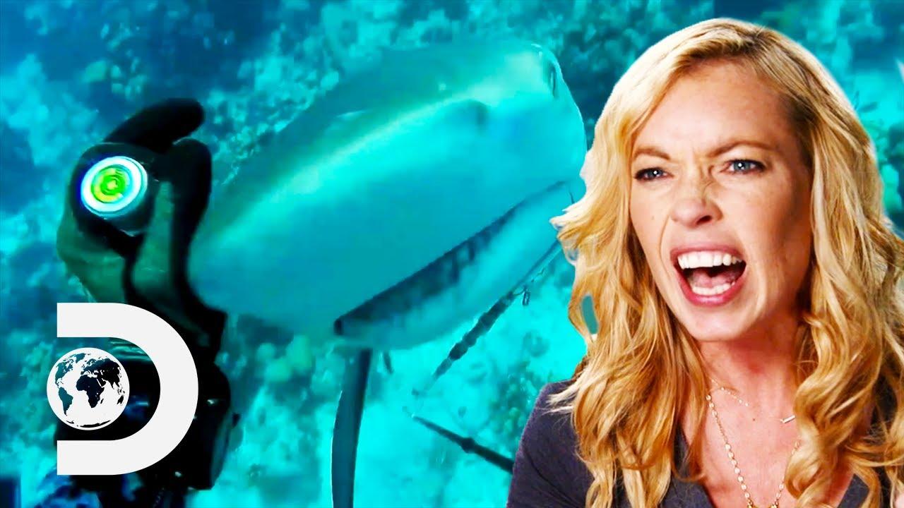 Shark Week's Top 12 Home Videos | Shark Week Sharktacular
