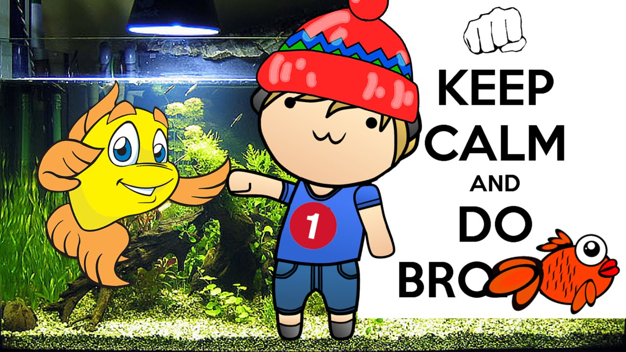 How to say good night to your friend fish (Funny video/ best vines style)
