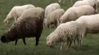 Video America Before Columbus (Documentary) download MP3, 3GP, MP4, WEBM, AVI, FLV Juli 2018