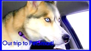DOG SHOPPING AT PETSMART | Shiloh and Shelby the Huskies go to Petsmart
