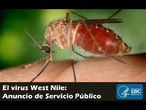 Public Service Announcement en español
