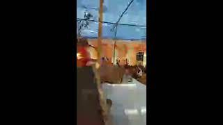 BV Sridhar Maharaj - Bhagwat katha in Noida (day 1, 14.02.2018)