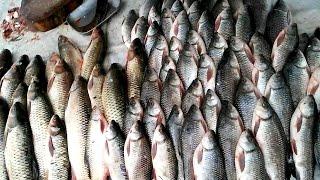 Fastest Fish Cutting | Catla catla Fish Cutting | Bengal Carp In Fish Market