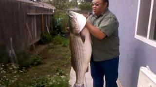 57.5 lbs. HUGE hmong Striper FISHING. Hella heavy (part 1)