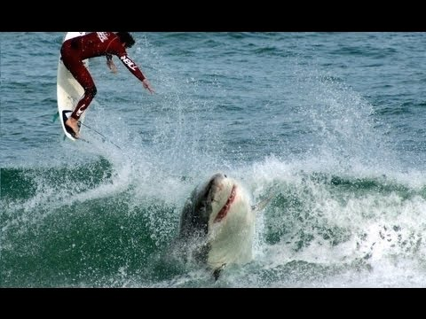 J bay surfer shark attack