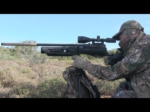 Airgun hunting with the regulated Umarex Gauntlet air rifle