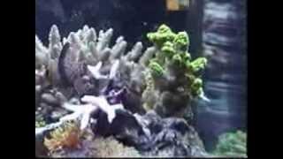 mark s saltwater tank