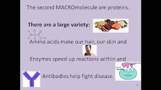 The 4 Macromolecules Song
