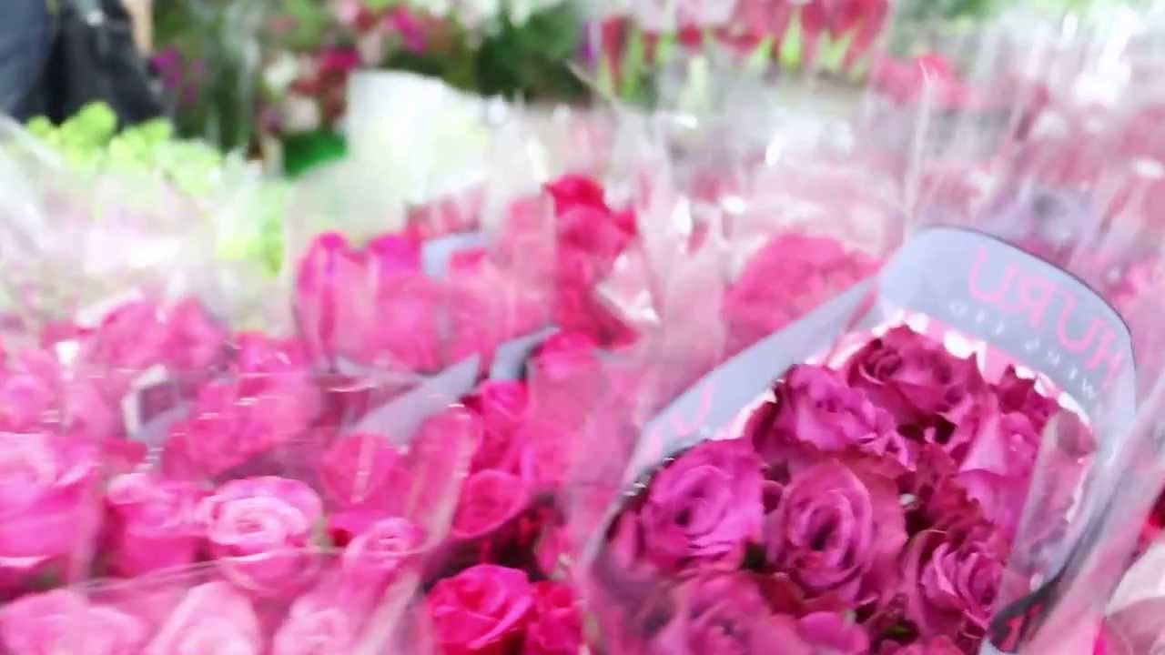 Roses for your valentine 23 beautiful kenya youtube roses for your valentine 23 beautiful kenya izmirmasajfo
