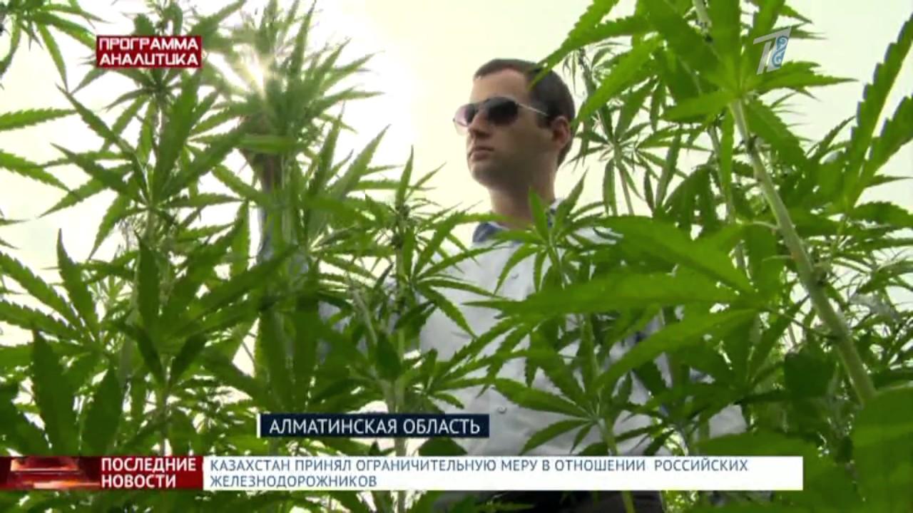 Марихуана f сдача анализов на марихуану