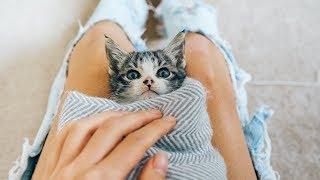 MEET BAMBI MY FOSTER KITTEN