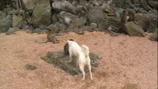 SEXpictures dog and monkey HD
