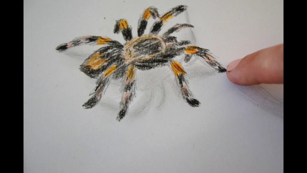 Spinne Zeichnen