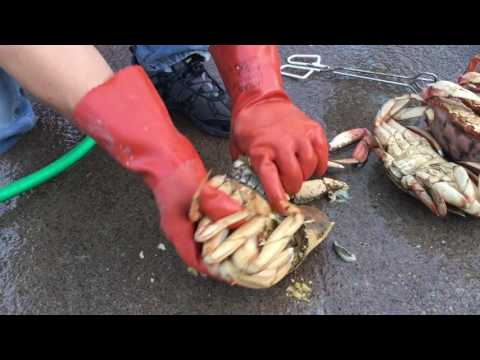 How to Clean Fresh Boiled Dungeness Crab