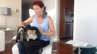 How to choose an airline approved pet carrier