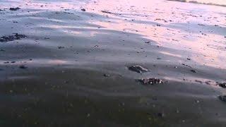 Природная катастрофа в СПБ (загрязнение воды Новое Девяткино)