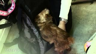 видео Как выбрать переноску для собаки
