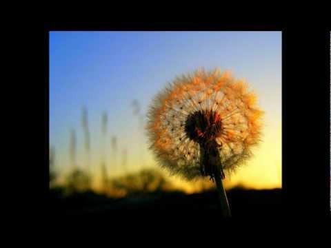 Beth Orton - Beautiful World