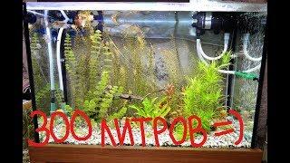 Обзор аквариума 300 литров