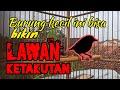 Crecetan Tajam Masteran Burung Jernih  Masuk  Mp3 - Mp4 Download
