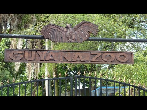 Trip to Guyana's Zoo.