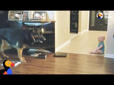 Dog And Baby Playing Hide And Seek | The Dodo
