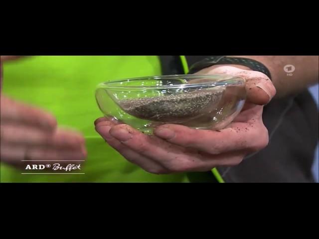 ARD-Buffet: Frühjahrskur für Zimmerpflanzen - Wurzel Power zur Bildung neuer Wurzeln