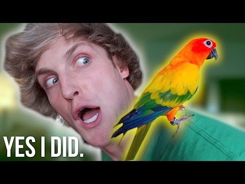 Thumbnail: YOU WON'T BELIEVE WHAT I DID TO MY BIRD...