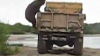 Интересный метод добычи рыбы продемонстрировал медведь на Сахалине