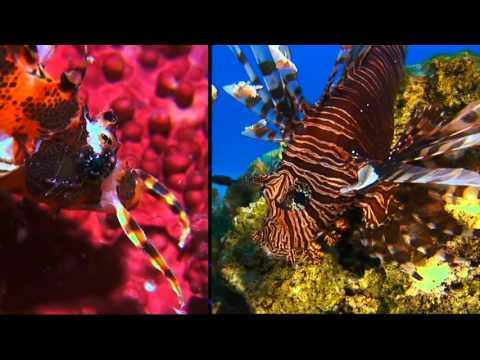 Wakatobi's Underwater Wonderland