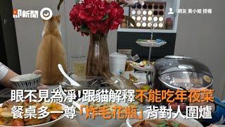 跟橘貓解釋不能吃年夜菜!牠不滿化身「炸毛花瓶」背對人圍爐|寵物|年夜飯|團圓