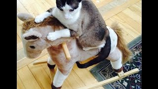 FUNNIEST Cat Video In The WORLD Loves To Ride Rocking Horse!!