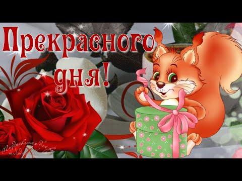 ☕️ Доброе утро! 🌸 Прекрасного дня! Красивая песня пожелание. Музыкальная видео открытка.
