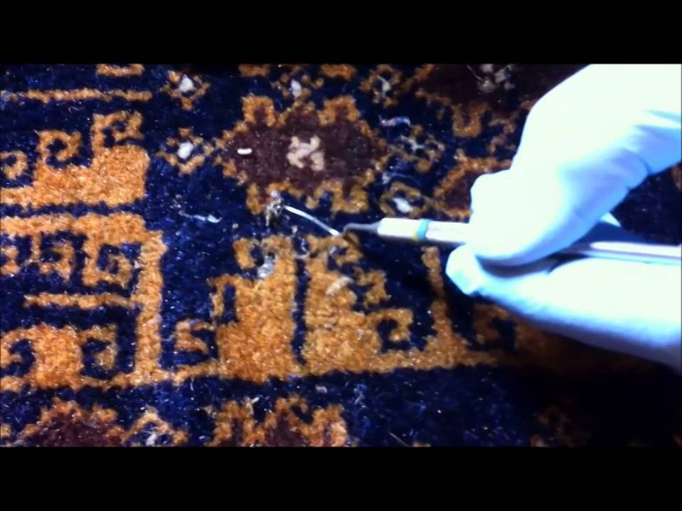 Moth Damage On An Oriental Rug Boston
