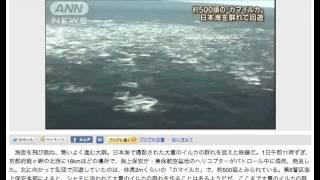 2014 04 01 日本海イルカ500頭