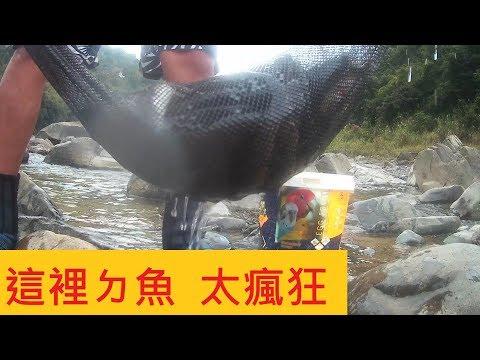 【南勢溪日月光溫泉】這裡魚超級多  又粗又大 原地不動就拉到手痠