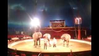Spindler Elephants / Circus Berolina