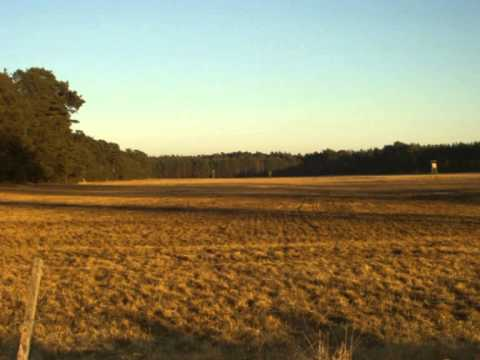Märkische Heide