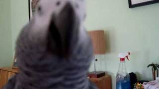 "Jezebel the talking parrot says ""messy bessie"""