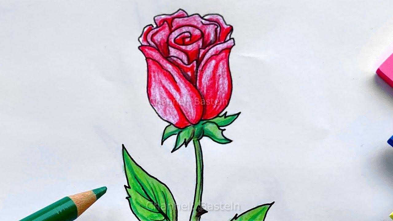 Einfach rosen malen 31 Rosen
