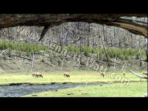 Discoveries America National Parks, Yellowstone.mp4